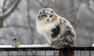 mokryi sneg