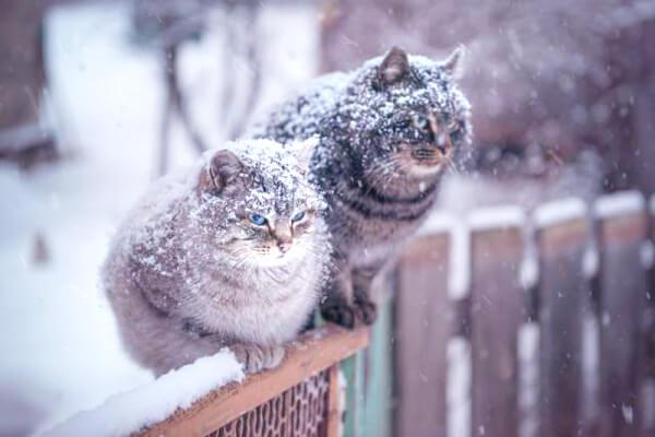 Напредстоящих выходных вКрасноярске будет морозно, однако солнечно