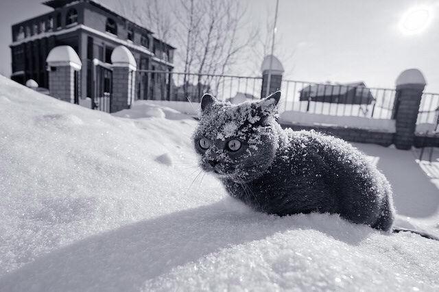 Погода вБашкирии на17января: снег игололед